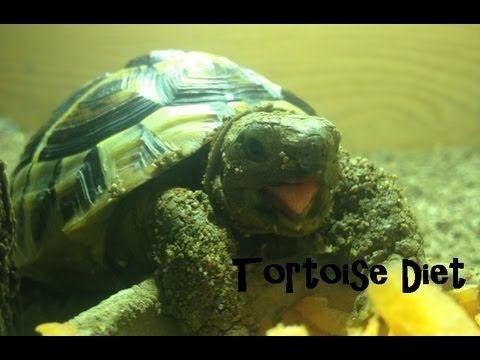 What Is A Horsefield Tortoises Natural Habitat? | Horsefield Tortoise