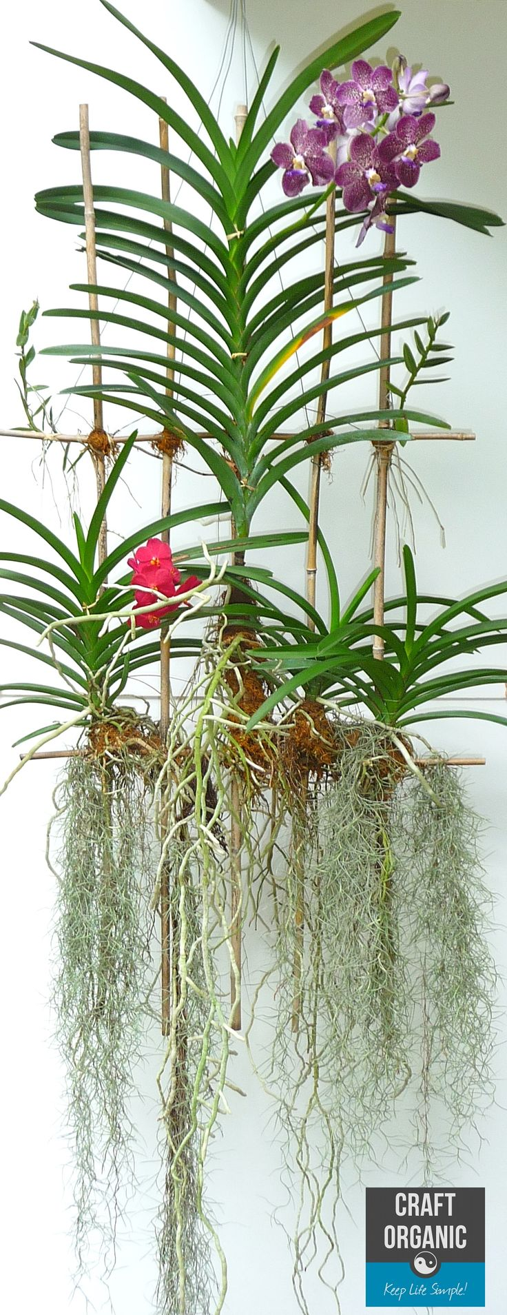 Orchids on Bamboo Lattice #Orchids