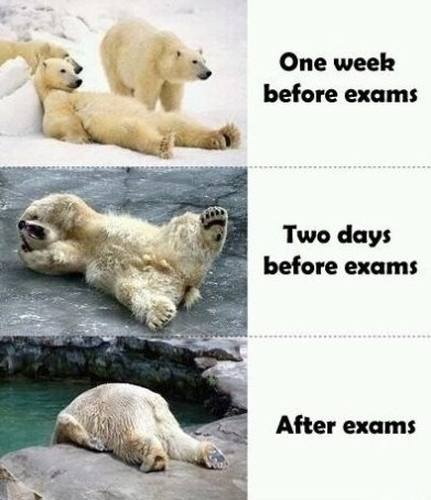 Exams. Very accurate. This is SO me right now!