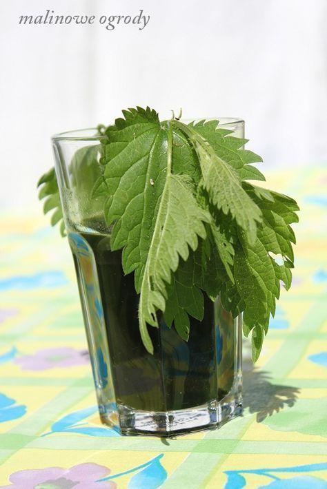 sok z pokrzywy | Malinowe Ogrody