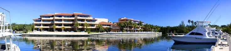 Puerto Aventuras. Una ciudad portuaria inmersa en una selva donde puedes nadar con delfines, alimentar lobos marinos, observar a los monos y las diferentes especies de aves, realizar snorkel en el Caribe, en los cenotes o en los ríos subterráneos.