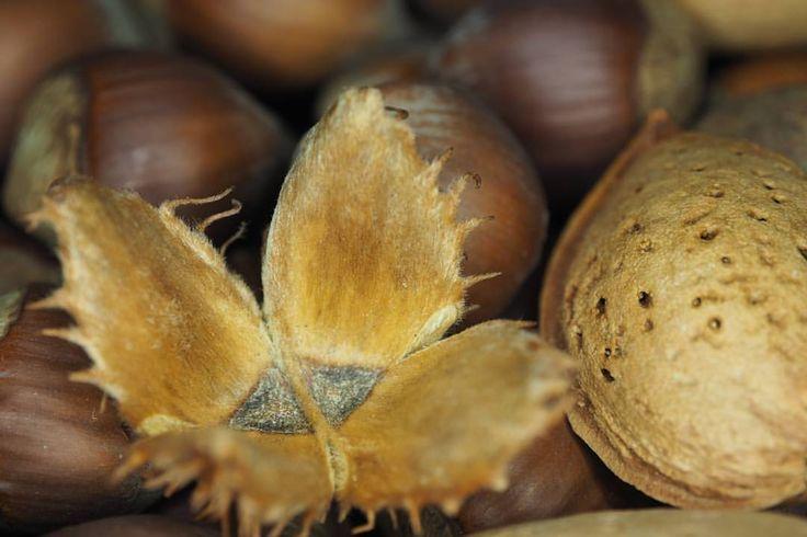 #almonds, #autumn