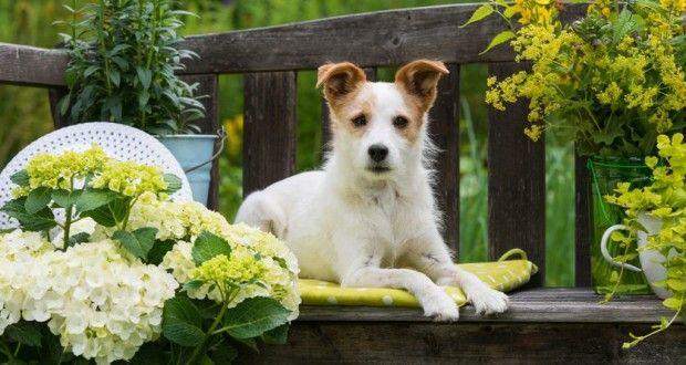 Herbicidas caseros seguros para mascotas