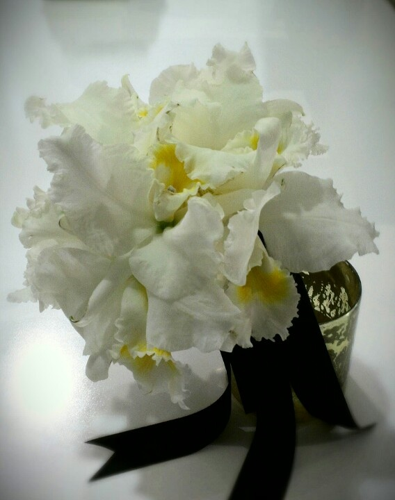 Best images about orchid flowers on pinterest
