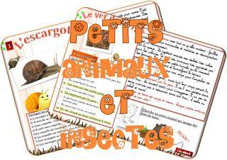 lecture document petits animaux et insectes