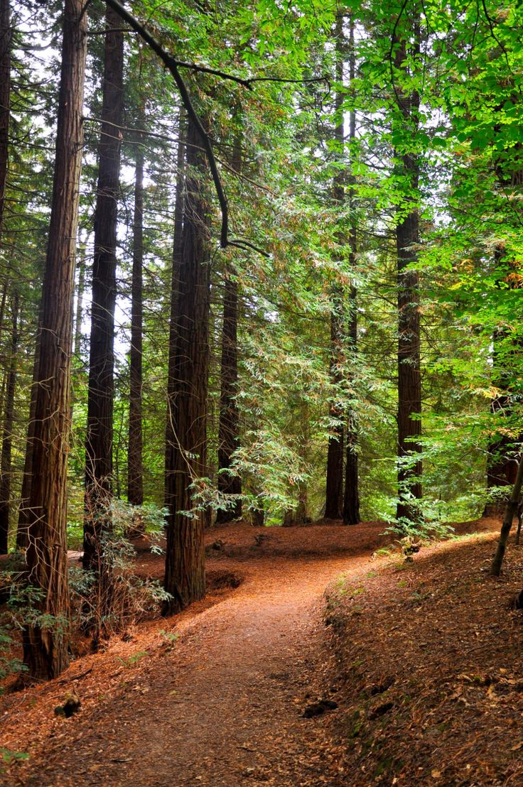 Walking around a small sequoia forest in Cantabria Spain [11951800] [OC] #reddit