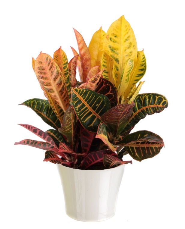 126 Best Images About Home For Houseplants On Pinterest