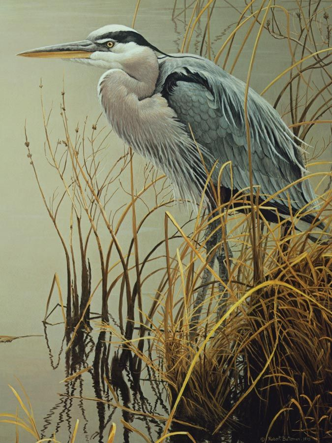 Great Blue Heron (500 Piece Puzzle by Cobble Hill)