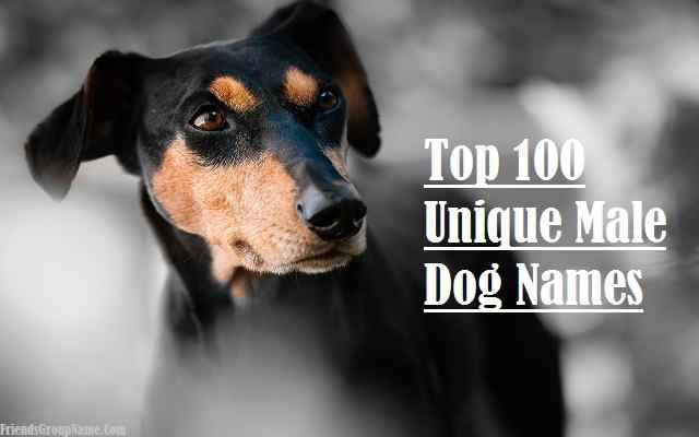 Top 100 Unique Male Dog Names To Unusual And Badass Dog Names