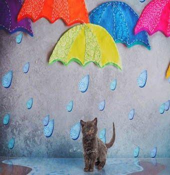 里親さんブログ綺麗な写真で私達のライコイ 艸 艸 Http Iyaiya Jp Cat Archives 80089 猫 猫 家 里親