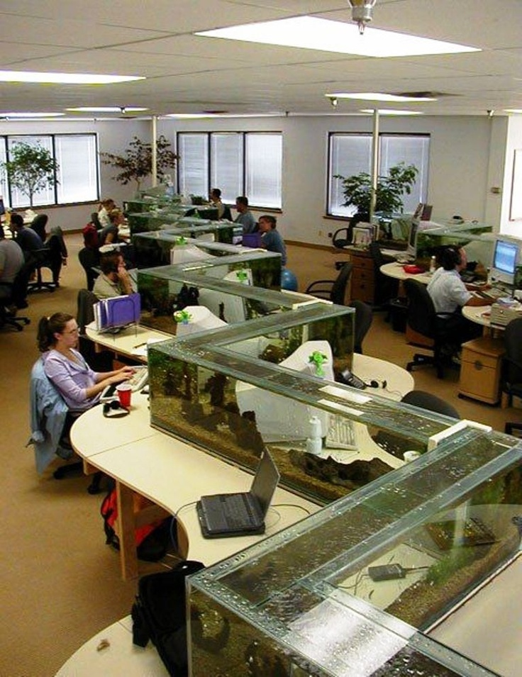 Funny Pictures About Epic Office Fish Tank Oh And Cool Pics Also Photos
