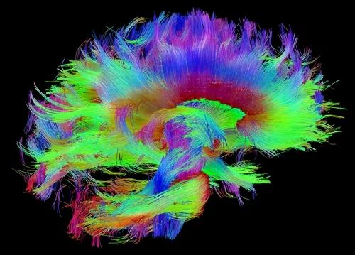 Research centers for accelerating new technologies that tackle nervous system...