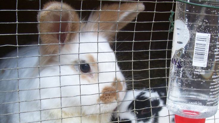 Petition · Gumtree, Friday-Ad: Ban the ads of baby rabbits for sale! · Change.org