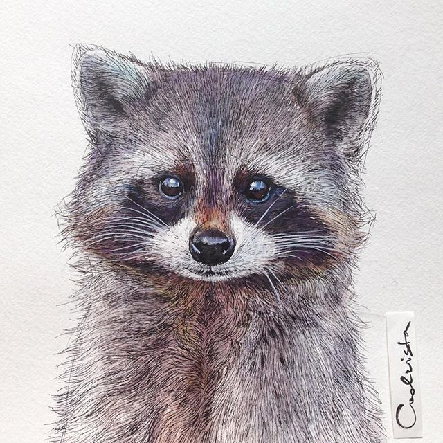 My #raccoon is done, so let's guess what is the next animal? #animal…