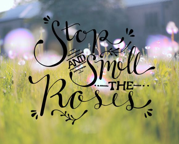 56 Best Stop And... Smell?... The Flowers Images On