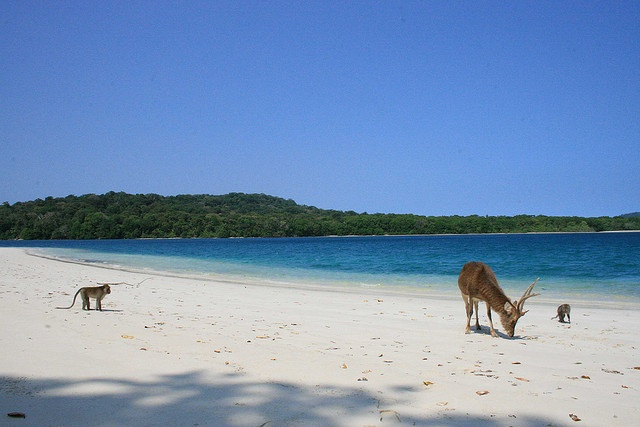 Enjoy beautiful beach with wild animals around | Peucang Island, Ujung Kulon National Park - Indonesia