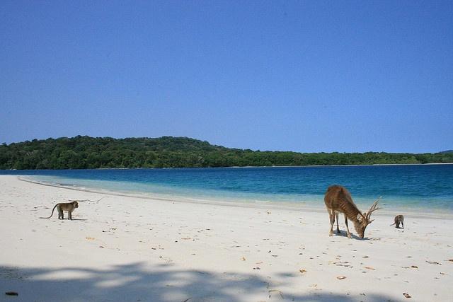 Enjoy beautiful beach with wild animals around | Peucang Island, Ujung Kulon National Park - Indonesia