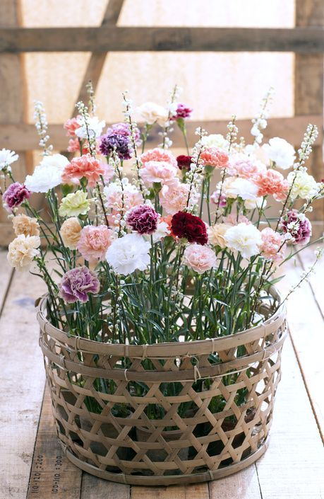 A gorgeous wicker basket of carnations.