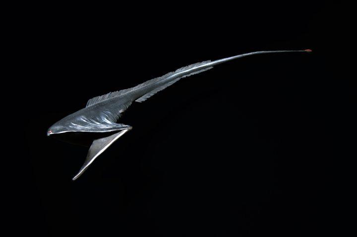 El pez pelícano (Eurypharynx pelecanoides) es un pez abisal raramente visto por los humanos aunque estas criaturas se enganchan de vez en cuando en las redes de los pescadores. Es un pez con la forma de una anguila, es la única especie del género Eurypharynx y de la familia Eurypharyngidae. Pertenece al orden Saccopharyngiformes, los cuales están estrechamente relacionados con las verdaderas anguilas. El rasgo más distintivo del pez pelícano es su enorme boca, mucho más grande que su cuerpo…