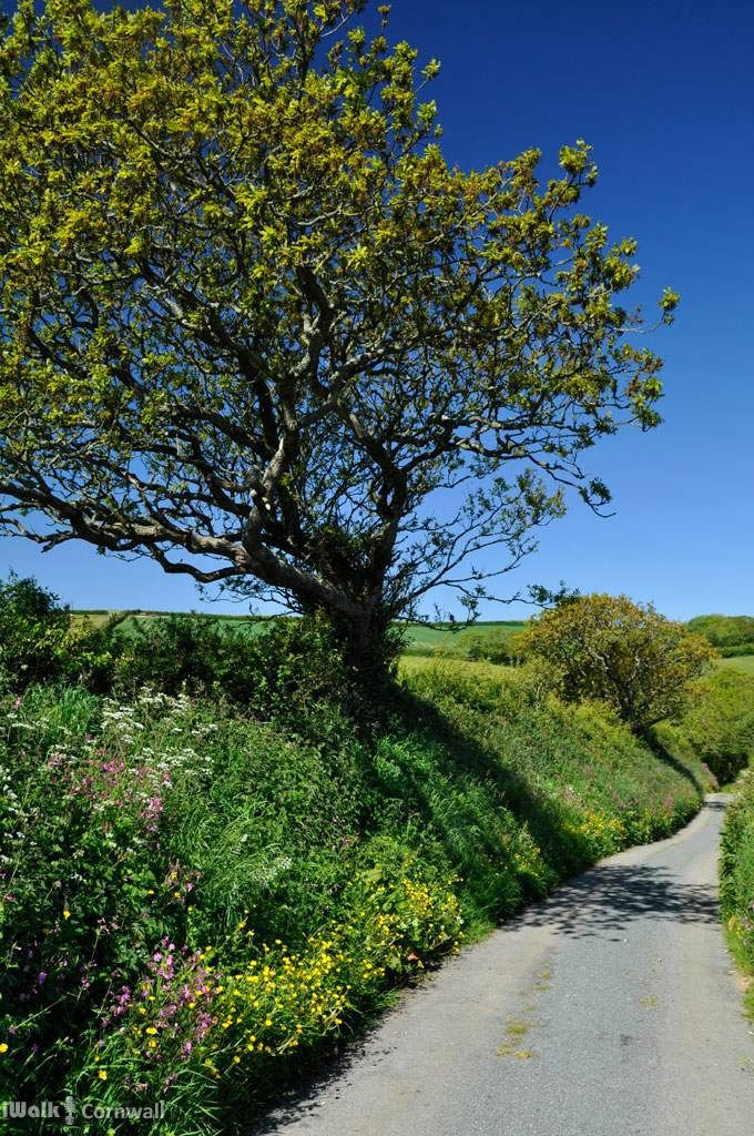 Lane from Poundstock, nr Bude, Cornwall, England