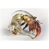 Blown Glass Hermit Crab Shell
