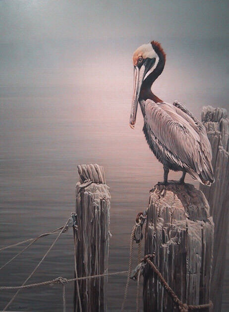 1000 Images About Pelicans On Pinterest Lilly Pulitzer