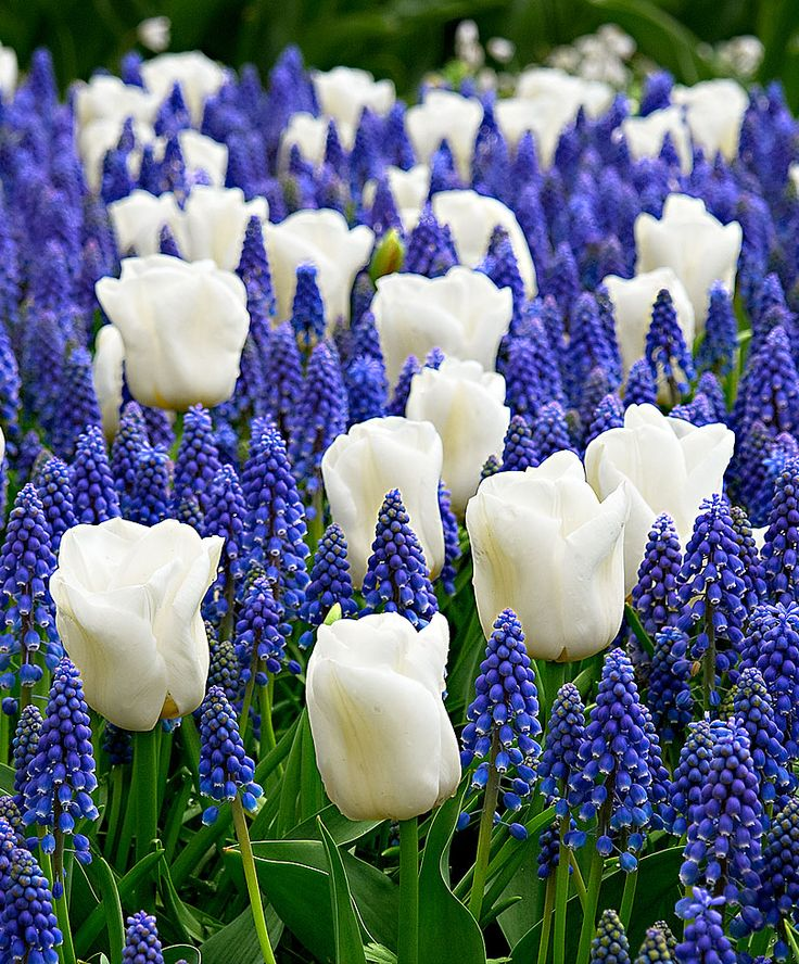 Flower Garden For Dummies: 17 Best Images About God's Beautiful Garden On Pinterest