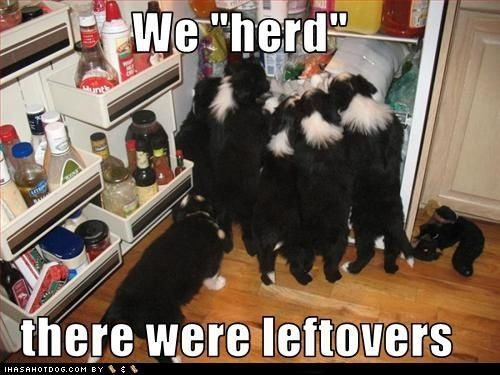 <3 Border Collies - Click image to find more Humor Pinterest pins