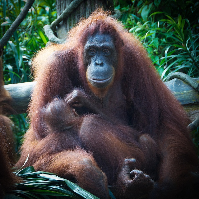 Mother & Child - Singapore Zoo 2012 | Flickr - Photo Sharing!