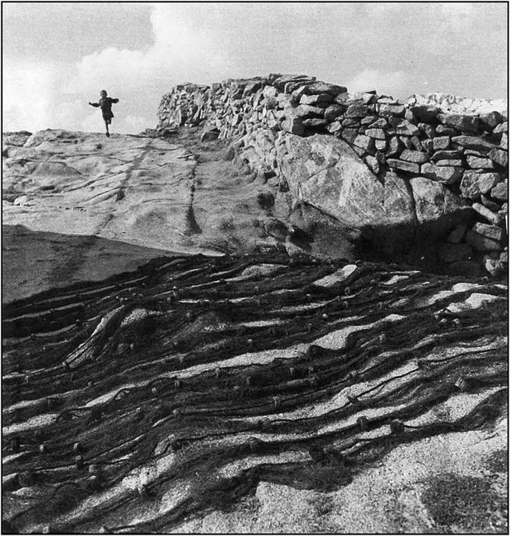 Ο Δημήτρης Χαρισιάδης γόνος αστικής οικογένειας καπνεμπόρων, γεννήθηκε στην Καβάλα το 1911. Σπούδασε Χημεία στη Λωζάνη, το ενδιαφέρον του ό...