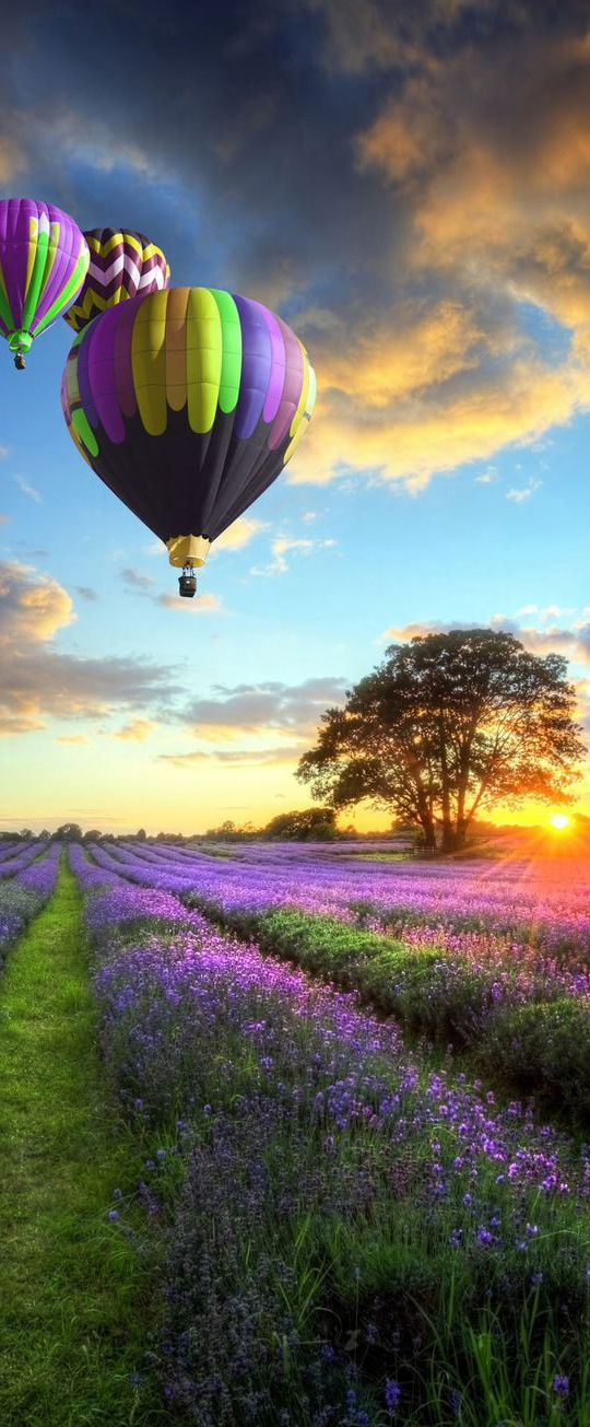 Hot Air Balloons over the Lavender Fields in Mont Ventoux - Provence | France