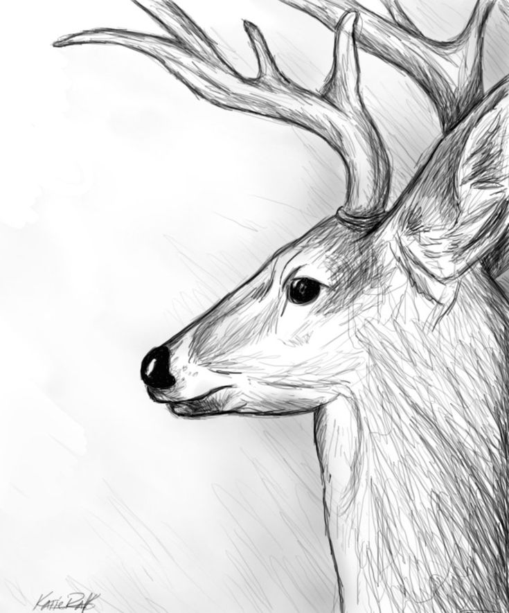 Deer Sketch. I would add more shading but like the profile idea!
