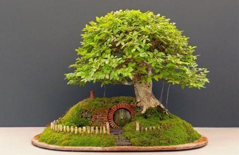 Картинки по запросу карликовые деревья картинки