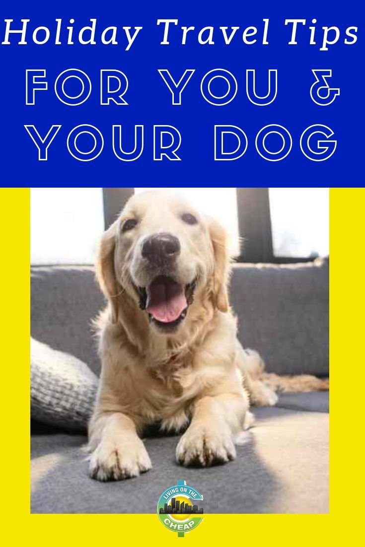 Visiting Family Or Friends With A Dog Foods Bad For Dogs Dogs Your Dog