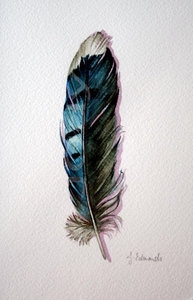 Blue Jay Feather – Nightly Study 416 – Original Watercolour  By, Jody Edwards