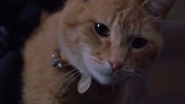 Scully the cat finds herself deposited in a house full of rats and tries to escape (Kitty Carnage Warning!) in the remake of Willard (2003).