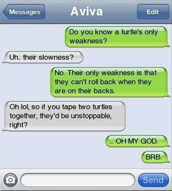 Turtles Text Message funny-stuff