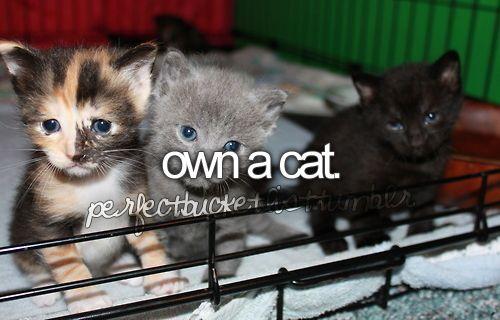 own a cat: Cutest Baby, Bucketlist, Kitty Cat, Buckets Lists, Animal Baby, Baby Kittens, Crazy Cat, Black, Baby Cat