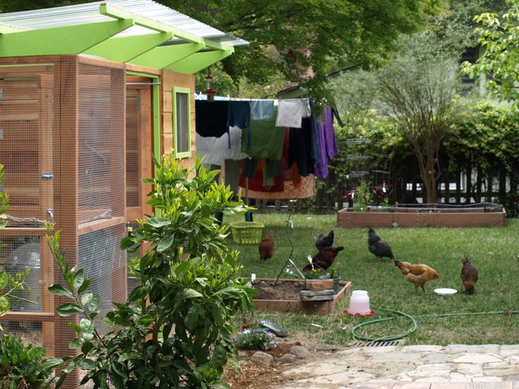 17 best images about chickens coop on pinterest gardens