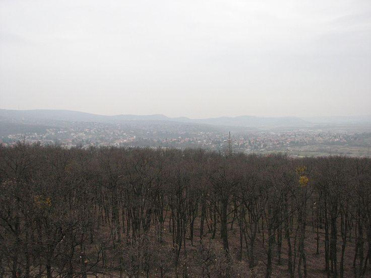 Vadaspark (Vörös-hegyi) kilátó (Budakeszi közelében 0.3 km) http://www.turabazis.hu/latnivalok_ismerteto_4781 #latnivalo #budakeszi #turabazis #hungary #magyarorszag #travel #tura #turista #kirandulas