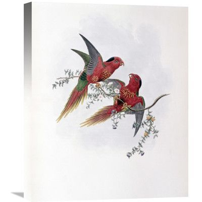 Global Gallery 'Pectoral Lorikeet' by John Gould Painting Print on Wrapped Canvas