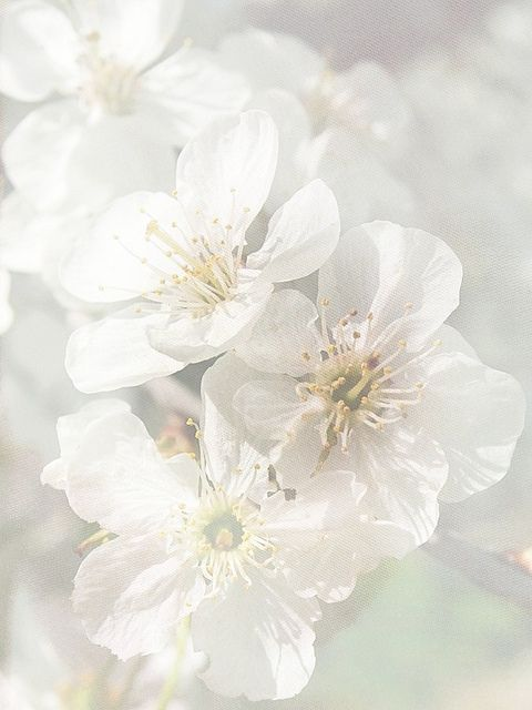 """""""Purity"""" by mamietherese on flickr"""