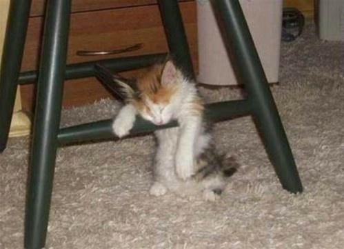 Tired kitten.Funny Kitty, Sleepy Time, Kitty Cat, Funny Humor, Funny Cat, Sleep Animal, Funny Stuff, Cat Naps, Bar Stools