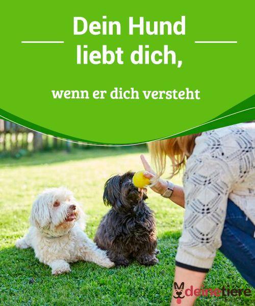 Dein Hund Liebt Dich Wenn Er Dich Versteht My Animals Hunde Hund Und Katze Tiere