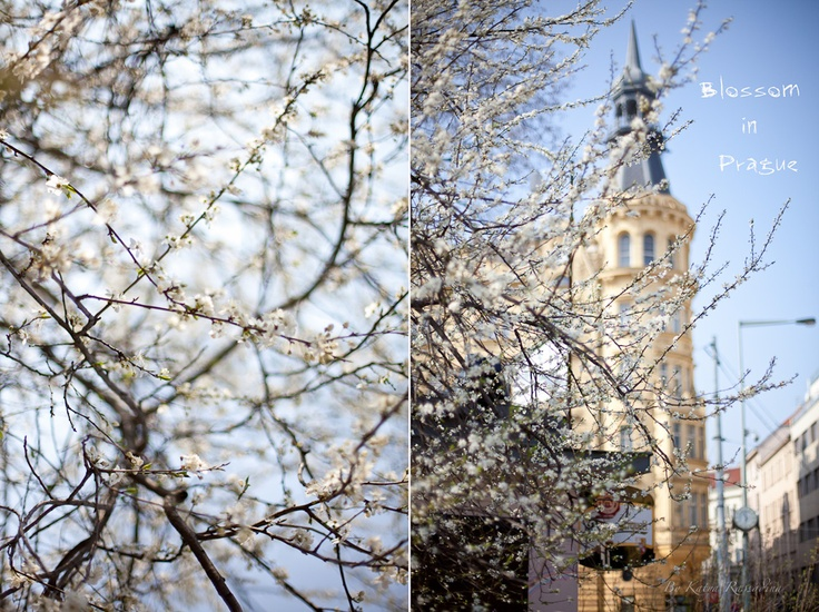 Lovely spring blossom in the center of the city