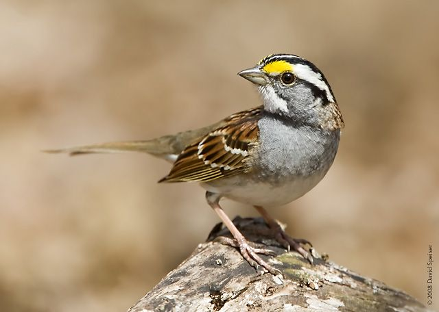 sparrow - Google Search