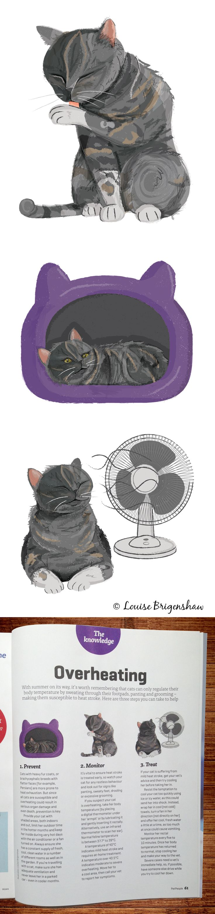Cat illustrations by Louise Brigenshaw for Pet People Magazine.