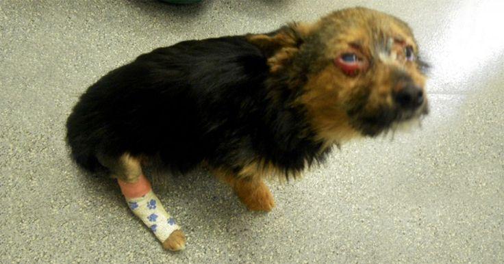 Έφηβοι βασάνισαν σκύλο σπάζοντάς του τα πόδια και βάζοντάς του φωτιά όμως εκείνο επιβίωσε. Crazynews.gr