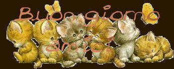 buongiorno gif animate - Cerca con Google