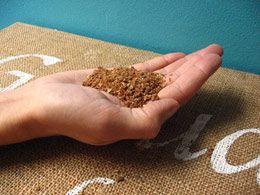 Pesupähkinä jauhettuna